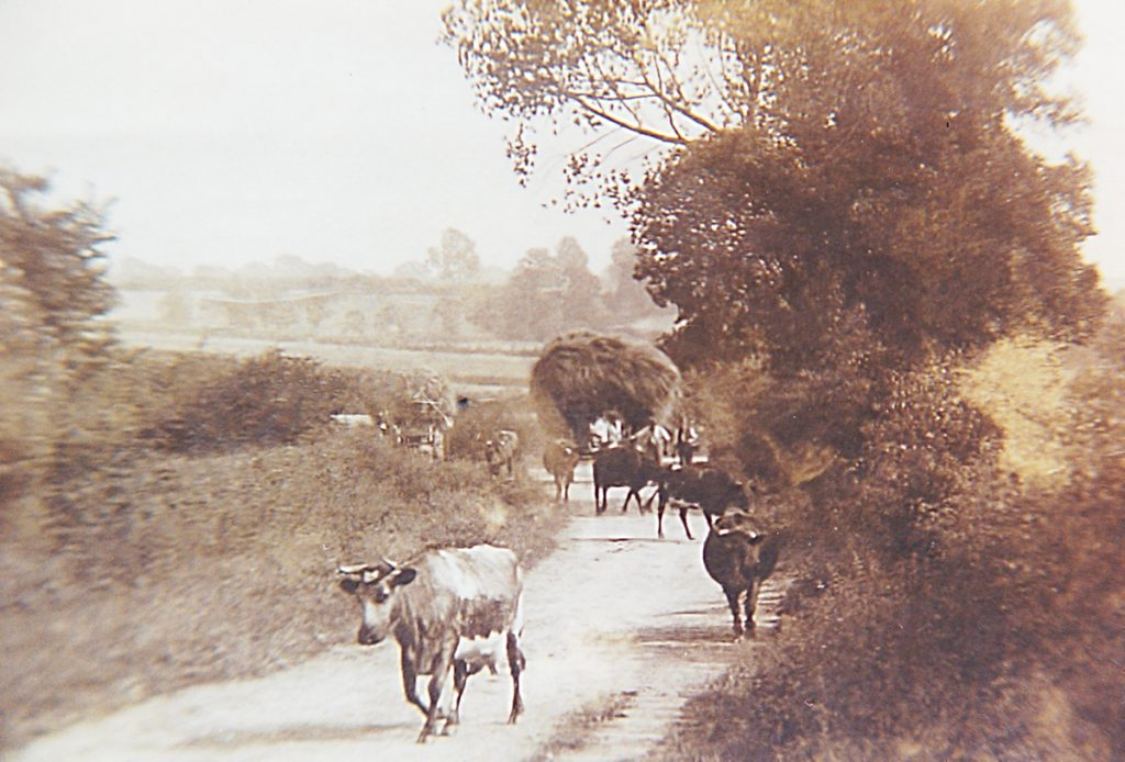 rural-scene-2